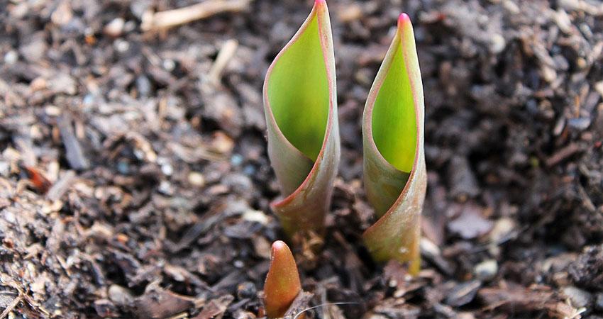 Garden Help - Fertilizing and mulching