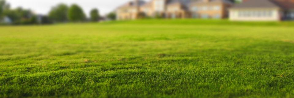 Lawn Maintenance & Care