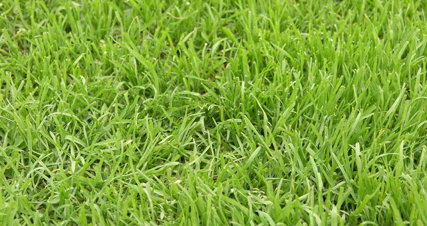 Garden Help - Lawn Repairs & re-turfing