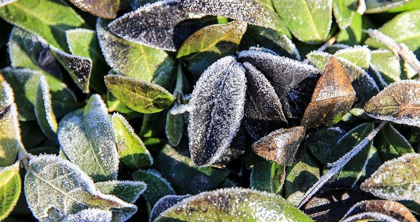 Garden Help - Winter Services